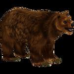 Brown Bear (Mad Head)