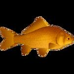 Common Goldfish (Ulquiorra)/Version 1