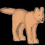 Bald Wolf (BRR)