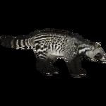 African Civet (ZTABC Team)