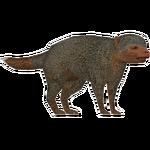 Dwarf Mongoose (DutchDesigns)/Version 1
