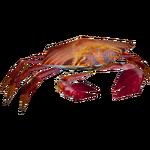 Ambient Sally Lightfoot Crab (Whalebite)
