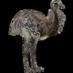 Darwin's Rhea (ZTABC Team)