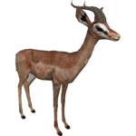 Gerenuk (DutchDesigns)