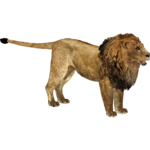 African Lion (Ultamateterex2)