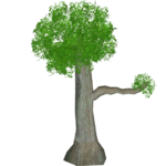 Small Perching Tree (Bunyupy)