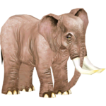 African Bush Elephant (Becuffin & Iba5000)