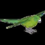 Antipodes Parakeet (Whalebite)