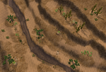 American Desert (Fauna)