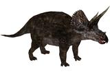 Prehistoric Park Triceratops (Zoo Tycoon 2 Thailand)