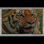 Big Cat Rescue AR Signs (Dwarfbomb)