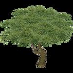 Eucalyptus (Fauna)