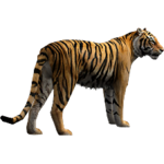 Bengal Tiger (Aurora Designs)