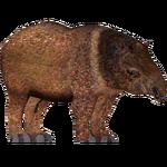 Collared Peccary (Zoo Admin Design Team)