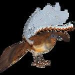 Albert's Lyrebird (Tamara Henson)