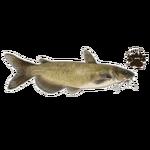 Channel Catfish (JimmyzHoopz)