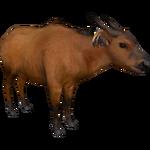 Congo Buffalo (DutchDesigns)