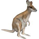 Agile Wallaby (DutchDesigns)