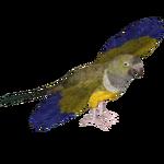 Chilean Burrowing Parrot (Deinonychus 110)