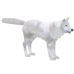 Arctic Wolf (Titan)