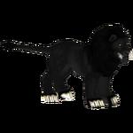 Black Lion (Penguinman & Wolf Loving Bear Lover)