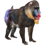 Mandrill (Aurora Designs)